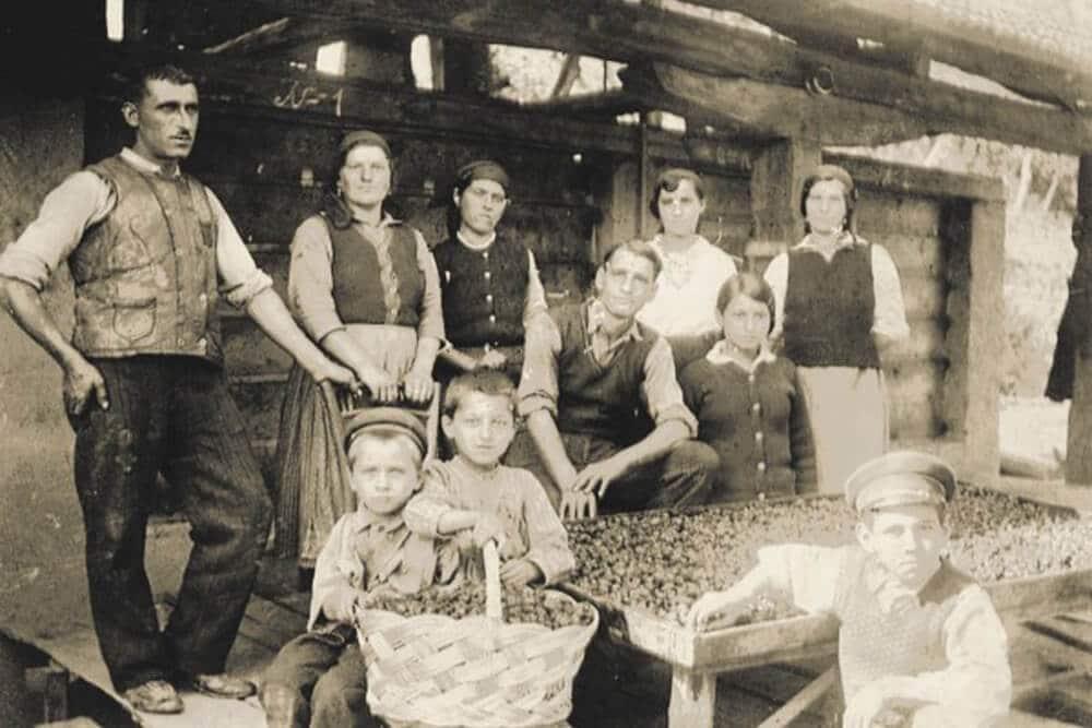 сливопроизводство в миналото в Троян